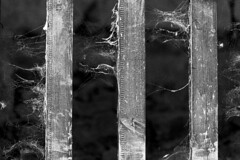 As Time Goes By (ToDoe) Tags: wood bw web cobweb schwarzweiss holz spinnweben astimegoesby schwarzweis holzlatten imlaufederzeit zaunlatten