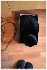 Het past | It fits (Dit is Suzanne) Tags: cat blackcat kat boris kater   borya zwartekat sigma30mmf14exdchsm img7304 canoneos40d  otofoto voetenfoto 03012015 ditissuzanne kotborya