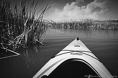 A STORM IS BREWING... (Darkmoon Photography) Tags: blackandwhite storm oklahoma monochrome perception kayak gimp cattails kayaking swamp okc bnw oklahomacity darkmoon kayaker stinchcomb northcanadianriver okckayak prodigy120