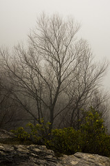 Growth (StephenChaotic) Tags: black tree green nature water fog dark point landscape grey mood moody ominous gray foggy scenic falls wv blackwater lindy gottowv