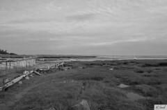 Nature (Marie-Claude Hamel) Tags: usa beach capecod massachusetts plage select tatsunis