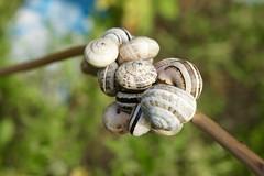 DSC01016 (hofsteej) Tags: lagune nature lagoon morocco maroc snails atlanticocean oualidia