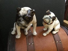 #rare #Austrian #englishbulldog #figurines at www.collectibulldogs.com #bulldogs #brilliant #antique #vintage #mycollection #collectibles #collecting #ceramics #porcelain #dogs #pet #pets #statue #exquisite #Beautiful (eiffion.ashdown78) Tags: pet pets dogs beautiful statue vintage ceramics antique figurines englishbulldog exquisite rare brilliant bulldogs porcelain collectibles collecting austrian mycollection