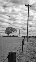 Marshville III (F. Neil S.) Tags: red clouds rural farm sony northcarolina filter fields wildflowers backroad telephonepole hilltop hoya fenceline unioncounty r25a 590nm nex6 fullspectrumconversion asymmetricaltree