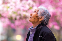Left to Ponder (jonocane210) Tags: china old pink woman cherry thought blossom chinese deep elderly cherryblossom aged kunming staring pondering oldface 500px ifttt