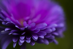 """""""For things to reveal themselves to us, we need to be ready to abandon our views about them."""" (.:heartw