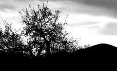 mpix 46 040816 EOS ELAN 7n 50mm Kodak BW400CN 041116 013e ~ Against The Sky (BDC Photography) Tags: usa blackwhite texas kodak 35mmfilm texashillcountry pipecreek canoneos30v canonef50mmf14usmlens banderacounty kodakprofessionalbw400cnfilm cloudsstormssunsetssunrises bwfp epsonperfectionv600photoscanner bwfpro58mm010uvhaze1xmrcfilter