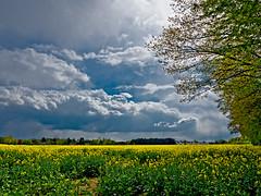 April weather (dolorix) Tags: rain weather clouds spring cologne wolken kln rape april raps regen wetter frhling dolorix