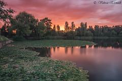 Water Lily (vahraz) Tags: longexposure sunset sky lake green sunrise canon landscape pond ngc australia canberra ndfilters canon6d