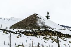 Alone. (Nirmalya Pandit) Tags: india white snow tree nature nikon srinagar landskape jammukashmir sonamarg d3300