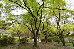 20160413-46-Kyoto Botanic Gardens (Roger T Wong) Tags: travel trees holiday japan kyoto canonef1740mmf4lusm botanicgardens 2016 canon1740f4l canoneos6d rogettwong