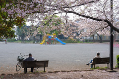 20160409-DSC_6868.jpg (d3_plus) Tags: street sea sky plant flower nature bicycle japan cycling nikon scenery outdoor daily bloom  cherryblossom  sakura streetphoto 28105mmf3545d nikkor   kanagawa    dailyphoto   kawasaki thesedays pottering    28105     28105mm   zoomlense    28105mmf3545  d700 281053545 kanagawapref  nikond700 aiafzoomnikkor28105mmf3545d  28105mmf3545af aiafnikkor28105mmf3545d