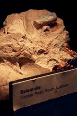 Opalized Belemnite Fossil (Piedmont Fossil) Tags: rock museum fossil sydney australia collection national opal