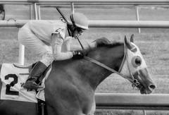 "2015-12-13 (99) r6 Jevian Toledo on #2 Classic Wildcat (JLeeFleenor) Tags: photos photography md marylandracing marylandhorseracing laurelpark bw blackwhite blackandwhite jockey جُوكِي ""赛马骑师"" jinete ""競馬騎手"" dżokej jocheu คนขี่ม้าแข่ง jóquei žokej kilparatsastaja rennreiter fantino ""경마 기수"" жокей jokey người horses thoroughbreds equine equestrian cheval cavalo cavallo cavall caballo pferd paard perd hevonen hest hestur cal kon konj beygir capall ceffyl cuddy yarraman faras alogo soos kuda uma pfeerd koin حصان кон 马 häst άλογο סוס घोड़ा 馬 koń лошадь maryland"