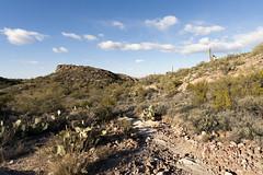 Grand Enchantment Trail - Arizona (Lucie Maru) Tags: statepark park arizona cactus usa hot southwest clouds landscape desert cloudy dry hike trail hikingtrail saguarocactus dryland