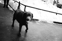 oghocjk310116-16 (rodina.bob) Tags: 400 vista plus