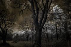 A flat tyre (c e d e r) Tags: sky color strange forest concept pressure ceder darklyseries