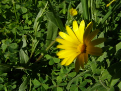(Psinthos.Net) Tags: flowers winter light sunlight nature countryside day january yellowflower greens wildflowers noon pollen sunrays wildflower yellowflowers sunnyday  orangeflowers    psinthos