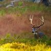 Michigan Whitetail Hunt 17