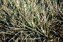 I Need an Easy Friend (Thomas Hawk) Tags: california usa america losangeles sanmarino unitedstates huntington unitedstatesofamerica southerncalifornia botanicalgarden desertgarden thehuntington huntingtonbotanicalgarden