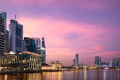 Glow Pink! (neoro_blitz) Tags: building architecture landscape singapore cityscape esplanade cbd hsbc merlion maybank oue ocbcbank uobbank canontse17mmf4l canon17mmtse fullertonbayhotel oceanfinancialcentre canontse17mmf4ltiltshiftlens canoneos5ds canoneos5dsr