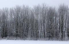 Fence (:Linda:) Tags: snow tree germany town thuringia hildburghausen nobw