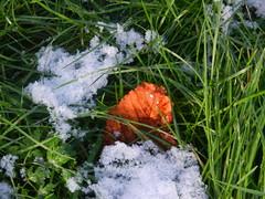 Snow 006 (NikWatt) Tags: snow nikon great scots greatphotographers edinburghphotographers nikwatt nikonccoolpix