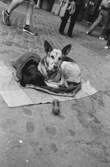 Italy 2015 B/W film (phoxey) Tags: street people blackandwhite italy rome film canon lecce elan7