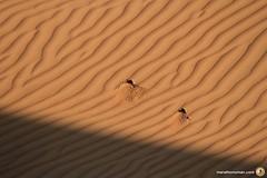 3-Oman-Desert-Marathon-day-2_1492