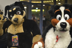 Further Confusion 2016 (I.M. Weasel) Tags: furry fursuit furtherconfusion fc2016
