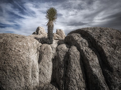Joshua Rock (DPRPhoto) Tags: joshuatrees desertlandscape rockformations joshuatreenationalpark surprisetank