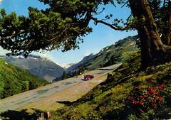 Austria - Tyrol - Timmelsjochpass [004] - front (Ye-Di) Tags: tree vw austria tirol sterreich postcard beetle tyrol mountian cartolina kfer hochalpenstrasse ansichtskarte maggiolino passodelrombo highalpineroad timmelsjochstrasse pdcprospectivedeporoscard