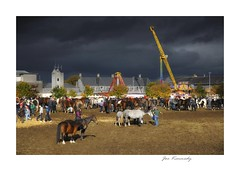 """A burst of light"" (joekennedy52) Tags: light horse ballinasloe fairday"