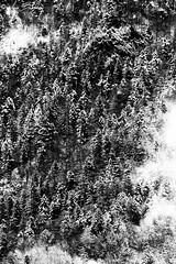 Black & White Trees (Luca Bobbiesi) Tags: trees panorama snow alberi clouds landscape blackwhite neve biancoenero canonef100400mmf4556lisusm trentinoaltoadige canoneos7d