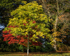 autumn colours (Anthony White) Tags: autumn trees red england green nature beautiful gardens natural branches stourhead gb wiltshire redandgreen stourton october2015