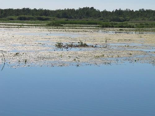 2010 07 08 Polonia - Warmia Masuria - Elblag - Il Canale - Jez Druzno - Lago Druzno - Area protetta_0917