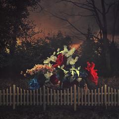 hidden treasures (Thomas Oscar Miles) Tags: flowers beauty photoshop photography blood nikon symbol fineart surreal squareformat darkart conceptualphotography