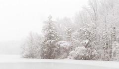 Heavy Snow (Dalliance with Light) Tags: trees winter sky snow storm ice nature forest landscape frozen us newjersey unitedstates highkey snowing fallingsnow heavysnow eastbrunswick dallenbachlake