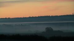 fog-threads-2 (karel.seidl) Tags: morning mist fog forest dawn outdoor vanillasky