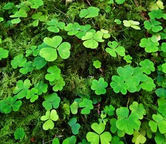 Green - Explore (RWGrennan) Tags: county travel ireland irish holiday plant mountains green day fuji ryan glendalough vegetation clover stpatricks wicklow shamrock 2012 grennan hs10 rwgrennan rgrennan