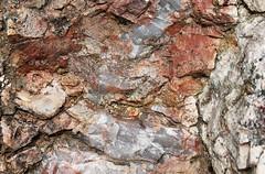 psms04 (srosscoe) Tags: texas geology schist metamorphic masontx hsugeology