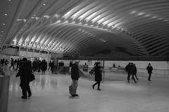 The Oculus (adrianmojica) Tags: city nyc newyorkcity ny newyork architecture canon photography eos photo photos manhattan calatrava 5d lowermanhattan oculus canoneos5dmarkii 5dmarkii 5dmkii canonef2470mmf28liiusm canon5dmarkiii