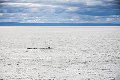Cormorans sur leur radeau (Seb & Jen) Tags: ocean canada bird quebec oiseau gaspesie cormoran baiedeschaleurs newrichmond