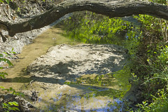 The Brook (pdecell) Tags: trees spring lawrencekansas