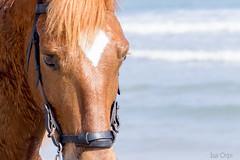 Corregudes de la Joia. Oliva. (ISA ORPI) Tags: horse caballo mar heart playa corazon
