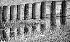 By the Green (BW) (brev99) Tags: blackandwhite green water golf turtles waterhazard d7100 ononesoftware silverefex topazdetail tamron70300vc perfecteffects9 southlakesgolfcourse