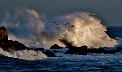 Morning Splash (Michael T. Morales) Tags: waves pacificgrove ptpinos