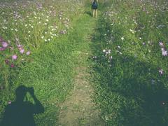 Inception (dpakisgood) Tags: flowers nature asia shadows parks korea seoul creep springtime following lurking lurk