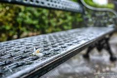 107_366_2016_ (manuelmorillo_fe) Tags: park parque orange flower bench photography nikon photographer blossom bokeh 28mm flor banco azahar 366 18g d7100 fotogafia