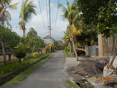 DSCN1789 (petersimpson117) Tags: pererenan pengembungan